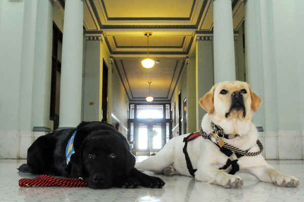ADW's working Courthouse Dogs recently won a $25,000 grant in partial support of the Courthouse Dogs program