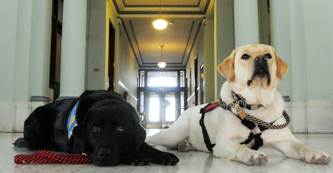 Courthouse Dogs Programs: Teamwork Supports Families, Generates Better Outcomes for Children