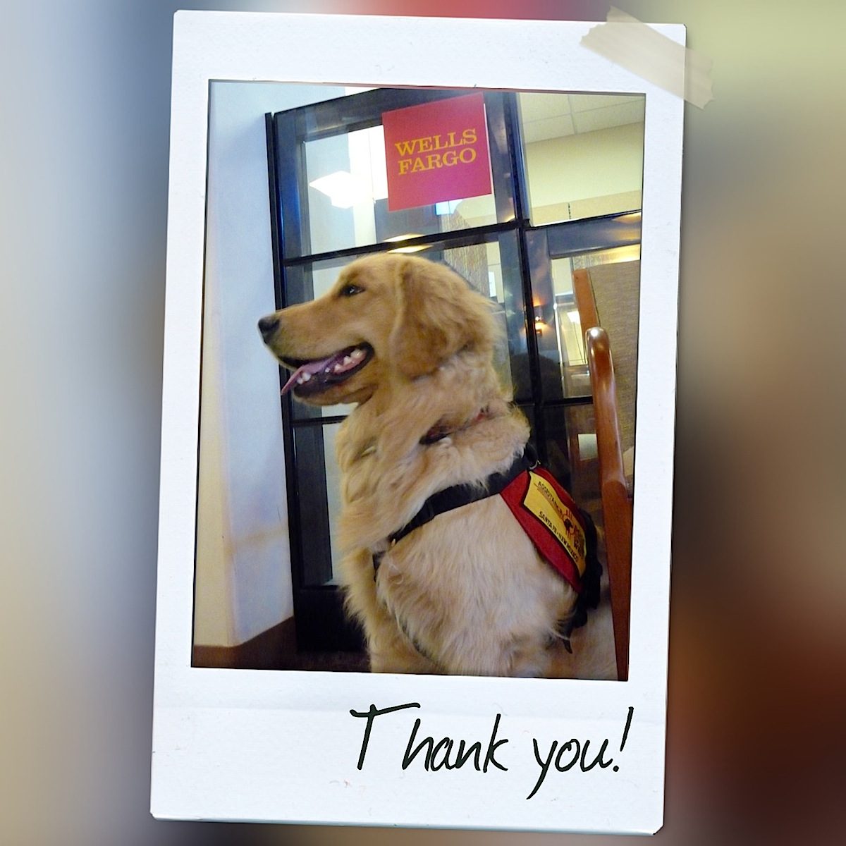 Warrior Canine Connection™ and Wells Fargo Bank: Gratitude to Our Grantors